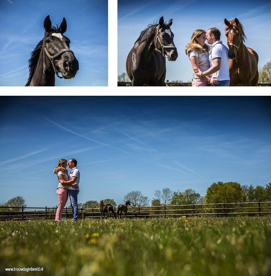 Loveshoot met paarden