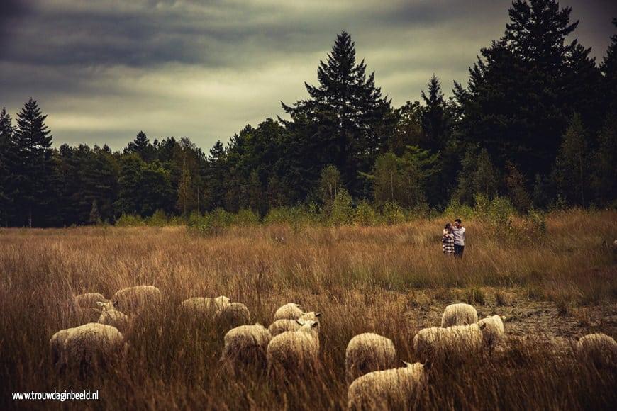 Loveshoot Natuurgebied Lisven Mierlo
