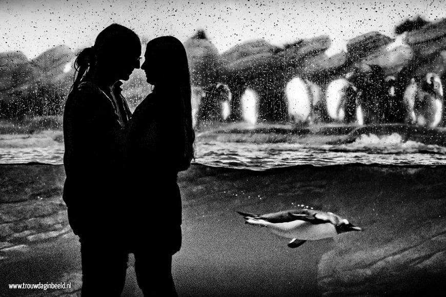 Loveshoot Oceanium