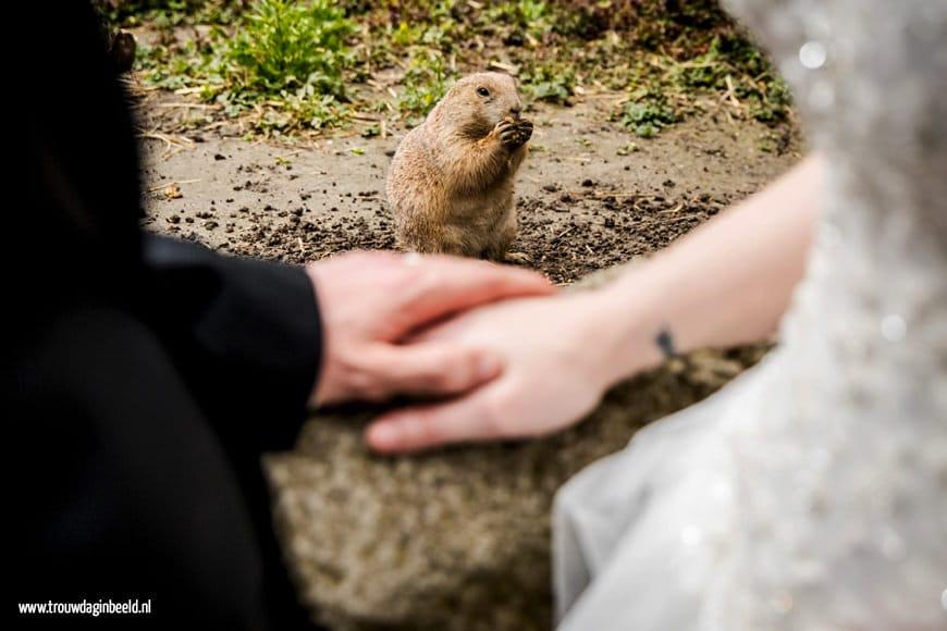 Fotograaf bruiloft Diergaarde Blijdorp